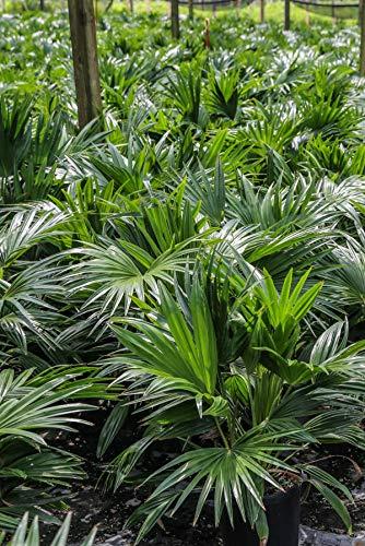 Best indoor palm trees