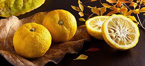 光食品『有機ゆずフルーツスプレッド』