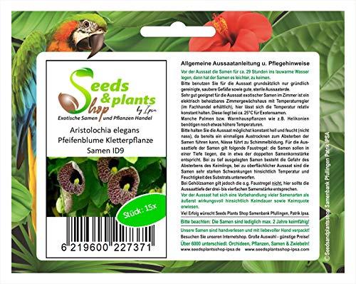 Stk - 15x Aristolochia elegans Pfeifenblume Kletterpflanze Samen ID9 - Seeds Plants Shop Samenbank Pfullingen Patrik Ipsa