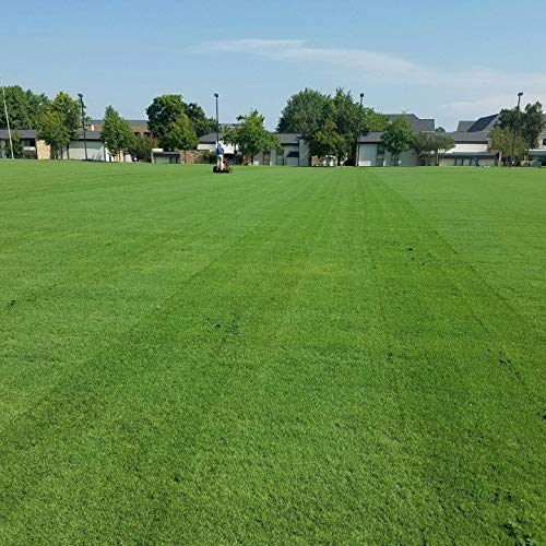 Outsidepride Arden 15 Hybrid Bermuda Grass Seed - 2 LBS