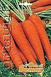 l'orto di semar semi di carota flakeer in busta