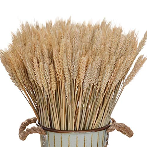 Amycute 100 pcs Ramo Trigo Artificial decoración Flores Secas Naturales del Trigo del Color...