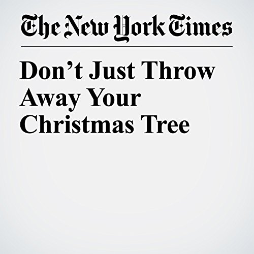 Don't Just Throw Away Your Christmas Tree copertina