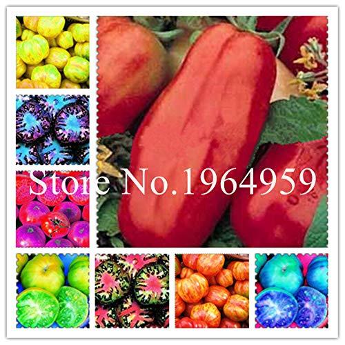 Bloom Green Co. Arc-en-Hot 300 Pcs frais Heirloom monstre tomate Bonsai, très rares légumes doux pour Bonsai jardin Cache-pot Easy Grow: mixte