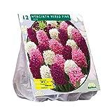 Hyacinth Mixed Pink 12 Stück Hyazinthen pink-gemischt Blumenzwiebel