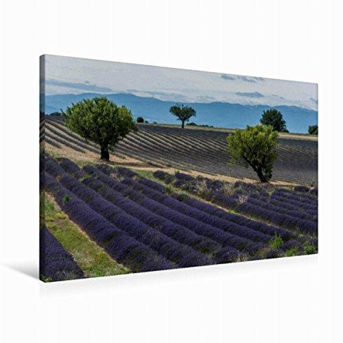 CALVENDO Premium Textil-Leinwand 90 cm x 60 cm quer, EIN Motiv aus dem Kalender Die Farbe des Lavendels | Wandbild, Bild auf Keilrahmen, Fertigbild auf echter Leinwand, Leinwanddruck Natur Natur