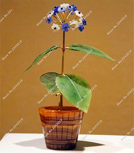 Bureau Bonsai Fleur Graine hybride Verbena officinalis, Verveine européenne Herb Seed, 100 particules purifient l'air absorbent les gaz nocifs