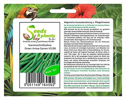 Stammschnittbohne Green Arrow Lot de 60 graines de haricots verts KS188