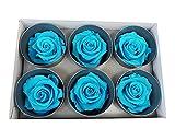 6 rosas estabilizadas turquesas