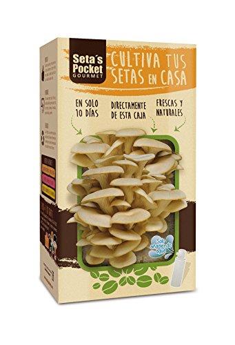 SETAS POCKET - Kit de SETAS AUTOCULTIVO - Cultivar setas en casa en solo 10 días.