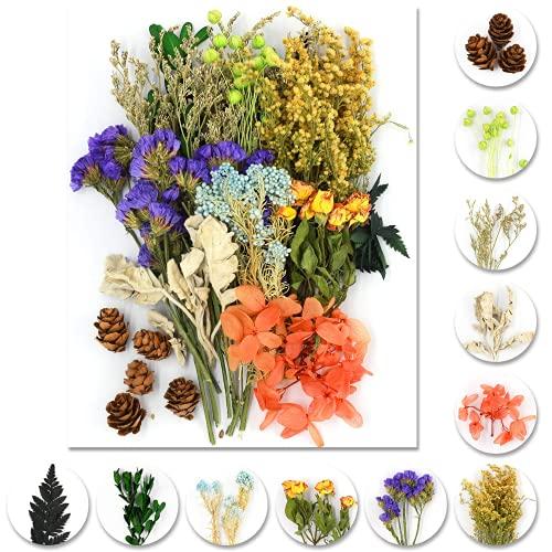 iDattel Natürliche Getrocknete Blumen,Blumen Natürliche Gemischte,DIY Natürliche Getrocknet Blumen Set für Kunst Basteln DIY Harz Scrapbooking Handwerk Karten Machen(grün+violett)