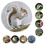 54 Foto Sticker Waldtiere als Aufkleber rund 19mm Größe, tolle Kindersticker mit Lerneffekt