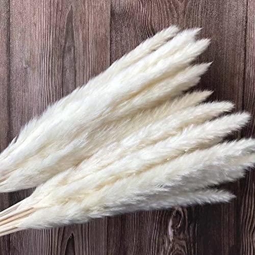 Kaxceay 30 Teile/länge 42-50 cm echt getrocknete natürliche Gras Reed Blume, trocken klein brudr buenstrauß, Pampas roeds, Dekoration, Hochzeit dekor (Color : S)