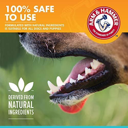 Arm & Hammer Dog Dental Care Fresh Breath Enzymatic Toothpaste for Dogs | No More Doggie Breath | Safe for Puppies, Clinical Care, Vanilla Ginger Flavor