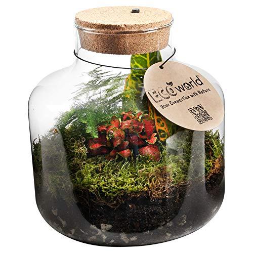 Ecoworld Tropical Biosphere - Ökosystem mit Lampe - LED-Beleuchtung - 3 farbige Zimmerpflanzen - Basic Glas - Ø 22 cm - Höhe 23 cm