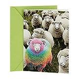 Hallmark Shoebox Funny Birthday Card (Rainbow Sheep)