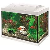 Superfish Start 20 Goldfish Aquarium LED - 36 x 23 x 32.1 cm - 20 L - Wit
