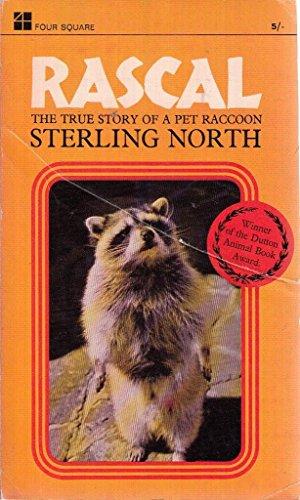 Der kleine Rascal - Der kleine Waschbär Rascal ist der liebste Spielgefährte von Sterling