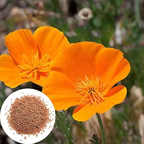 Benoon Eschscholzia Seeds, 100...