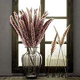 XHXSTORE 25pcs Fleurs Séchees Naturelles Brun Herbe Pampas Sechees Décoration pour Maison Table Balcon Mariage Bouquet de Fleurs Vase-Environs 45-47cm