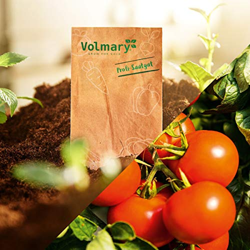 Volmary Stab-Tomate 'Campos®' (Sportivo), F1 | Saatgut | leckere Tomaten | für 8 Pflanzen