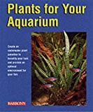 plants for your aquarium