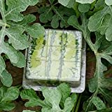 DIY Shaped Watermelon Shaping Growth Molds Fruit Shaping Growth Molds Watermelon Growth Moulds Garden Fruit Growth Forming Mould Tool (Square-Shaped)