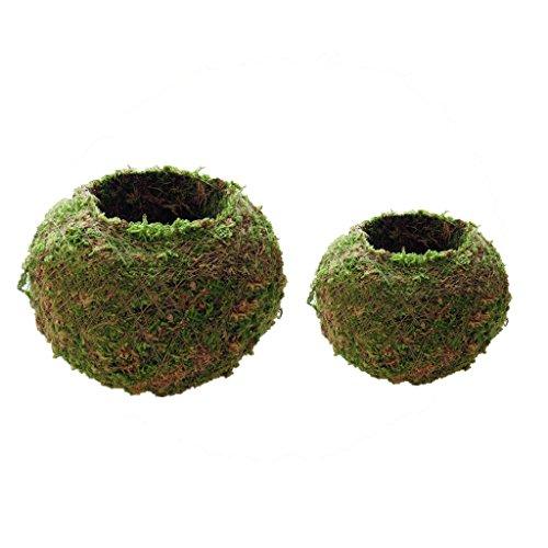 perfk Juego de 2 Piezas de 6 Cm, 12 Cm, Diseño de Tejido Natural, Bola de Musgo, Maceta para Plantar