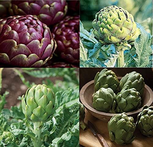 David's Garden Seeds Collection Set Artichoke 8367 (Multi) 4 Varieties 125...