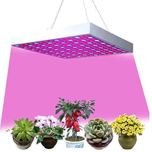 M.H Lighting Co.,Ltd -  Led Pflanzenlampe