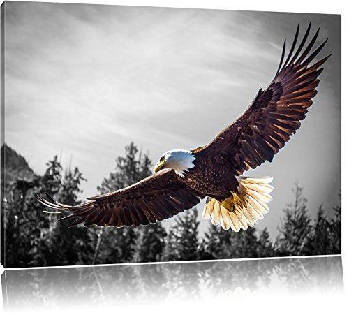 großer fliegender Adler schwarz/weiß Format: 100x70 auf Leinwand, XXL riesige Bilder fertig gerahmt mit Keilrahmen, Kunstdruck auf Wandbild mit Rahmen, günstiger als Gemälde oder Ölbild, kein Poster oder Plakat