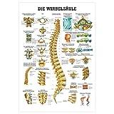 Die Wirbelsäule Lehrtafel Anatomie 100x70 cm medizinische Lehrmittel -
