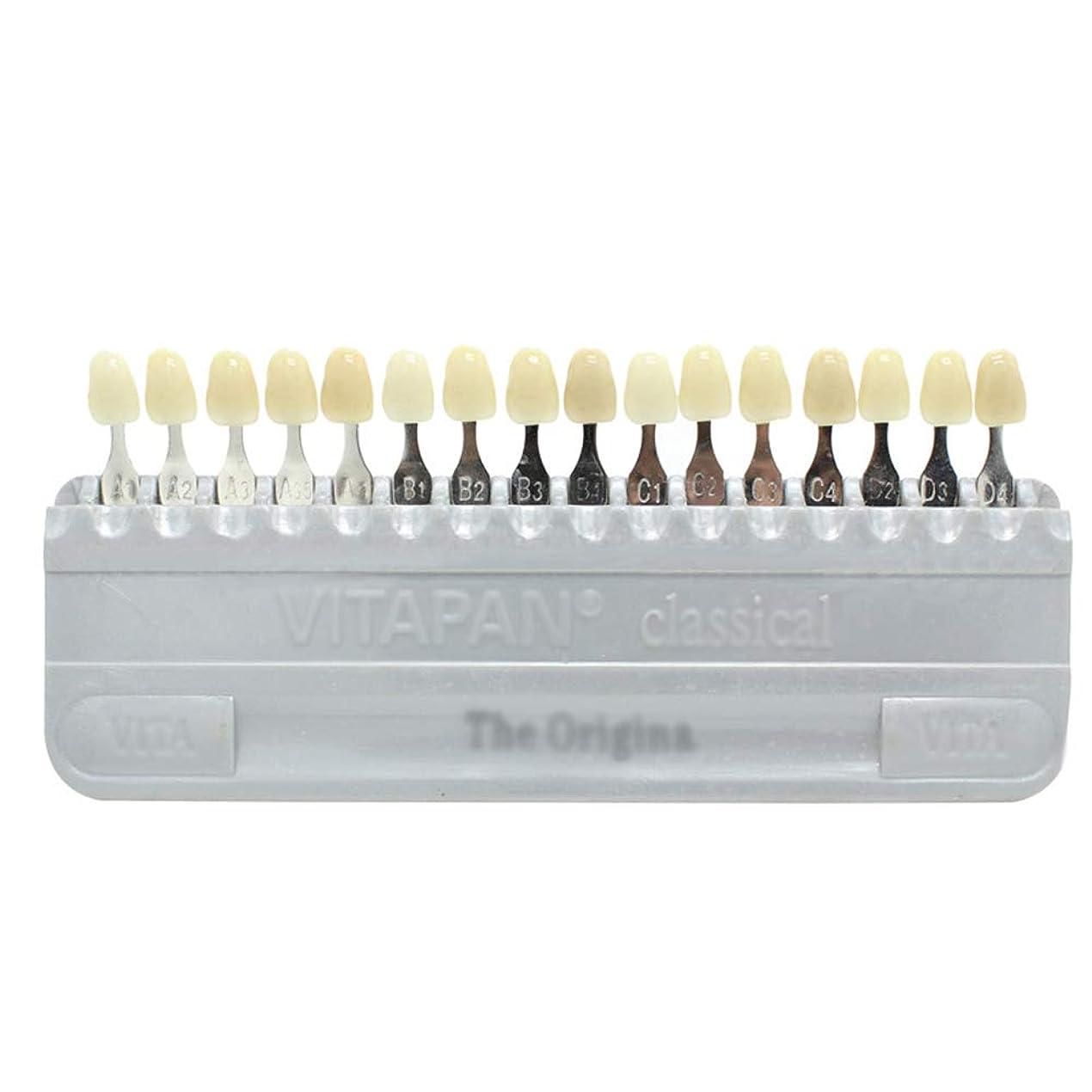 フルートアクセント接辞PochiDen 歯科ホワイトニング用シェードガイド 16色 3D 歯列模型ボード