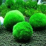 ECMQS 2.5-4.5 cm Mini Aquarium Pflanze Aquarium Garnelen Nano Für MARIMO Premium Qualität MOOS Balls Aquarium Ornament Dekoration