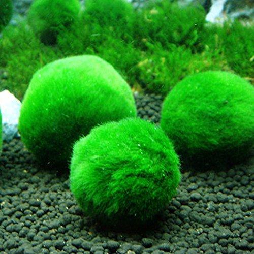 ECMQS 2,5-4,5 cm mini aquarium plant aquarium garnalen nano voor MARIMO premium kwaliteit MOOS BALS aquarium ornament decoratie