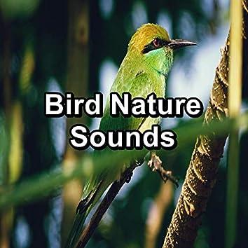 Bird Nature Sounds