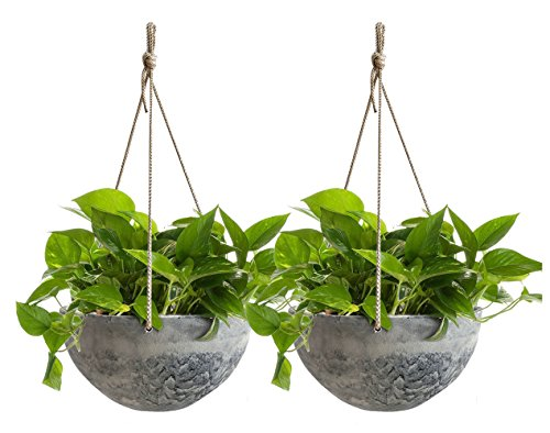 Best Patio Hanging Plants