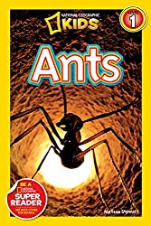 10 Awesome Insect Books For Kids They Will Love 10