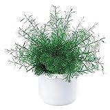 WERKA PRO - 04473 Plante de Neptune Vert