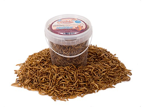 Chubby Mealworms Mehlwürmer getrocknet, Wildvogelfutter, 1 Liter