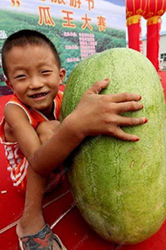 30PCS Multicolor Pastèque Graines géant Graines de pastèque fruits bio Graines de légumes New variétés végétales pour le jardin à la maison jaune
