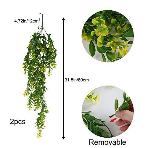 XHXSTORE Plantas