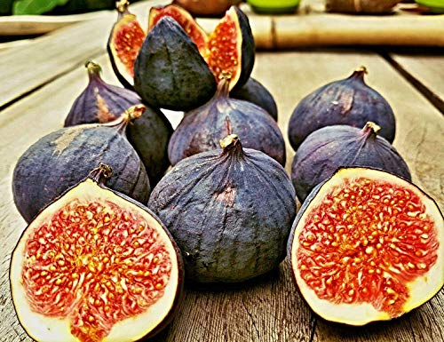 1000 Samen schwarze türkische Bursa Feige, black bursa fig seeds, very sweet