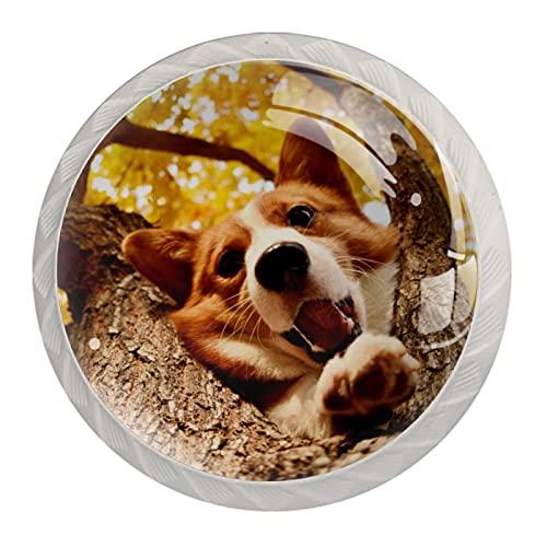 ATOMO 4 pomos de gabinete para cajón, aparador, gabinetes de cocina, armario de baño, lindo perro Corgi escalando el árbol otoño