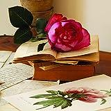 Draeger Paris - Rose sur livres
