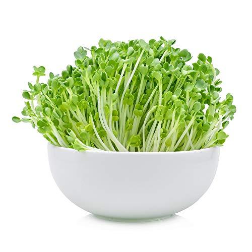 1 Lb Non-GMO Arugula Vegetable Seeds