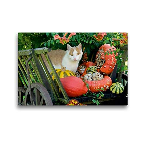 CALVENDO Premium Textil-Leinwand 45 x 30 cm Quer-Format Katze in einem Leiterwagen mit Kürbissen, Leinwanddruck von Katho Menden