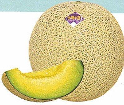 10 graines, Ichiba Kouji, Melon hybride - Cette spécialité Melon domine le marché japonais