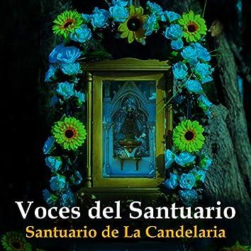 Trotecillo Virgen de La Candelaria