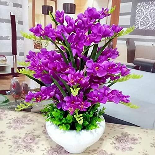 Phalaenopsis-Samen, Orchidee, Blume,...